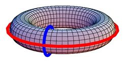The two generators of the homology group of the torus